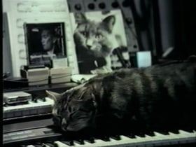 Cat Listening to Music